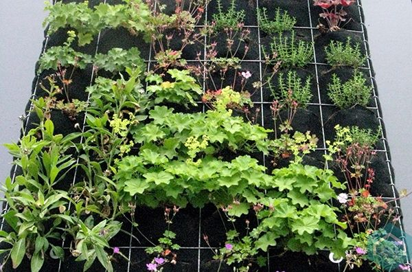 Verticale Tuin Systeem : Verticale tuin groengevel geveltuin levende muur groene muur